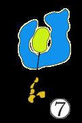 Holes 07